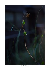 2019/3/8 - 17/21 photo by shin ikegami. - SONY ILCE‑7M2 / Carl Zeiss C Sonnar T* 1.5/50 ZM (shin ikegami) Tags: sony ilce7m2 sonyilce7m2 a7ii 50mm carlzeiss sonnar csonnar50mmf15 tokyo sonycamera photo photographer 単焦点 iso800 ndfilter light shadow 自然 nature 玉ボケ bokeh depthoffield naturephotography art photography japan earth asia