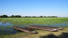 Botswana canoes,  Okavango Delta (h0n3yb33z) Tags: botswana animals wildlife canoes okavangodelta africa