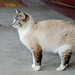 Nermal Kitty