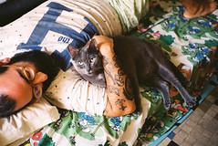 (Bárbara Lanzat) Tags: 35mm film analog leicaminilux leica kodak200 colorplus200 diary summer friends valencia nap family summerdiaries filmisnotdead ishootfilm bárbaralanzat cat