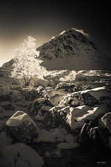 Its your time to shine! (Geoff Moore UK) Tags: backlight backlittree mountainlight snow brightwintersdays mountainsnow mountainimage lonetree