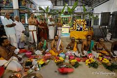 kumbabhishegam of newly built Gopuram or Tower@Sri Siva Vishnu Temple,Chenna-92 (ppaulvadivu) Tags: paulvadivu chennai sivavishnutemple india hindu templefestivals 28012019