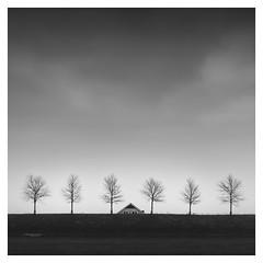 Dutch Polder - Behind the Dike (Marco Maljaars) Tags: beemster dutch polder blackandwhite marcomaljaars dike monochrome minimalism sky mood landscape trees light bw netherlands house