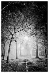 Finding My Way (ianrwmccracken) Tags: fife autumn bw urban landscape tree nikon glenrothes mist leaf monochrome leaves atmosphere footpath night lowlight