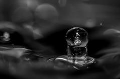 goutte (Laurent Hutinet) Tags: tamronsp60mmf2macrodiii eos6d eos6dmacro goutte macro nature water waterdrop