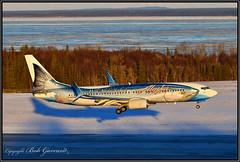 N559AS Alaska Airlines  Salmon-Thirty-Salmon II (Bob Garrard) Tags: n559as alaska airlines salmonthirtysalmon i iwildalaskaseafood b0eing 737 anc panc