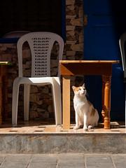 Essaouira, cat in sunlight (RaKra42) Tags: katzen marokko reise reisen säugetier tiere travelling africa animal animals cat lifestyle mammals morocco sunlight tableanimal travel wildlife