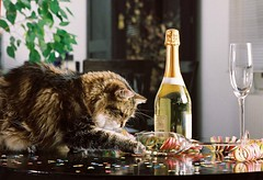Happy New Year Humans! (cats and other pets) Tags: katze sekt fasching kater