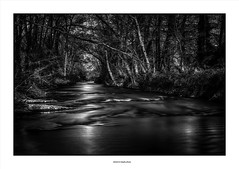 By The River Dark... (michel di Méglio) Tags: bw forest foret river riviere monochrome silverefexpro noiretblanc nikon 35mm nikond7100 light lumière ombres france provence longexposure poselongue filtrend1000 neutraldensity filtre filternd1000
