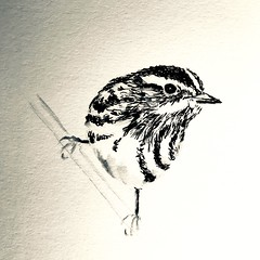 B170-365 one bird a day - B&W bird (2) (www.doortje.nl) Tags: vogel pájaro uccello passarinho طائر oiseau птица birdo voël 鸟 doortjenl 1tekeningperdagnl pen ink inkt