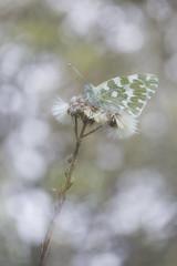 Nebulosa (explore) (Rafael Díez) Tags: españa larioja sojuela rafaeldíez primavera naturaleza macro mariposa bokeh desenfoque dobleexposición
