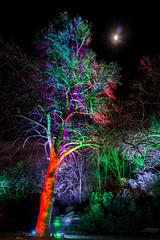 Grugapark Essen (Richter.V) Tags: bäume sträucher beleuchtung illumination nacht park botanischergarten grugapark parkleuchten licht leuchten farben