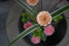 Mituhama (yuyosimu) Tags: planar zeiss sel50f14z fe5014za fe50 fe5014 a7rii fe50mmf14