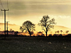 Evening Light (Tobymeg) Tags: evening light scotland holywood layers trees poles sky field depth glow golden hills grey