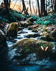 A Silent Wood 🌲 (benji.g) Tags: wood creek waterfalls smoothwater beautiful nature natur frühling spring mothernature sony sonyalpha sonyalpha6400 austria österreich kärnten carinthia