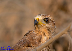 107641432 (TARIQ HAMEED SULEMANI) Tags: sulemani tariq tourism trekking tariqhameedsulemani winter wildlife wild birds nature nikon