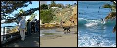 Fun in the Sun (Bennilover) Tags: beach surfing lagunabeach benni dog dogs running painting artists pleinair painters surf waves ocean january sunny california