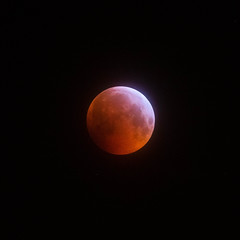Super Blood Wolf Moon - Lunar Eclipse - 21-01-19 (dalejckelly) Tags: canon canon7dmarkii canon100400f4556lisusm lunar lunarphases moon moonphases supermoon superbloodwolfmoon lunareclipse astrophotography bloodmoon astronomy scotland nightsky