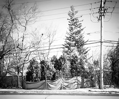 Shield (Demmer S) Tags: trees wrap shield protection winter seasonal cold snow seasons wrapped cover enclose surround barrier guard defence protect enclosed covered guarded tree treebranches branches plants nature plant foliage powerlines wires powerline cables pole utilitypole lines street curb road streetphotography shootthestreet streetshots documentary outside streetscene urbanexploration outdoors suburban urban suburb fenced fencedfriday fencefriday fencelike fence fences fencing hff happyfencefriday bw monochrome blackwhite blackandwhite blackwhitephotos blackwhitephoto arboreal