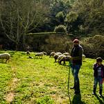 Shepherds thumbnail