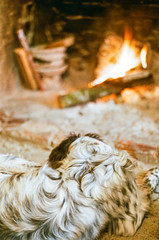Sleeping 'Cat' (My . December) Tags: fujisuperia200 fuji nikonf100 nikolozjorjikashvili 50mmf18 film analog analogue ishootfilm tbilisi georgia mydecember landscape grain roll superia