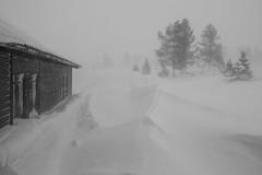 Blizzard / Lumimyrsky 2 (akkujala) Tags: finland lapland lappi suomi blizzard muonio pallas