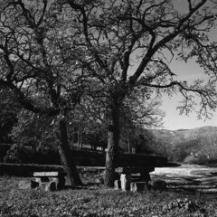 Eine Wanderung (Une promenade) (lebre.jaime) Tags: portugal beira covilhã tree bench path rest hasselblad 500cm distagon c3560 epson v600 affinity affinityphoto analogic film120 blackwhite bw noiretblanc pb pretobranco mf mediumformat 6x6 squareformat ptbw