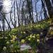 Soleil et fleurs de printemps