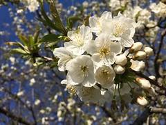 Potranno tagliare tutti i fiori ma non fermeranno mai la primavera. (Pablo Neruda)