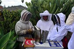 DSC_9768-61 (jjldickinson) Tags: nikond3300 107d3300 nikon1855mmf3556gvriiafsdxnikkor promaster52mmdigitalhdprotectionfilter longbeach bixbyknolls longbeachbeekeepers outreach class beeprepared insect bee honeybee apismellifera hive hiveinspection smoker dickbarnes