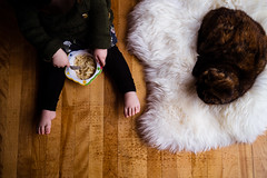 Board Books and Chill (kandisebrown) Tags: 2019 fredericton newbrunswick march2019 sonya7iii zara babybrodin 2yearsold cats sheta