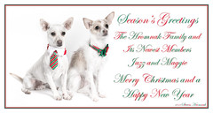 2018 Season's Greetings - Merry Christmas and a Happy New Year (GAPHIKER) Tags: jazz maggie chihuahua chinesecrested corgi mix merrychristmas merry christmas happynewyear christmascard happyslidersunday hss littledoglaughedstories