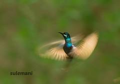 110638496 (TARIQ HAMEED SULEMANI) Tags: sulemani tariq tourism trekking tariqhameedsulemani winter wildlife wild birds nature nikon