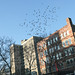 winter birds over the lower east side