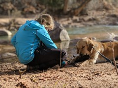00100lPORTRAIT_00100_BURST20181228151309065_COVER (KevinXHan) Tags: zions national park dog golden retriever cute aww parus trail hike walk nature outdoors google pixel3 photoblog photodiary