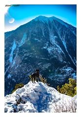 Le chien et le Catogne / Face à Face (jamesreed68) Tags: chien animal paysage nature catogne valais montagne mountain alpes alps suisse schweiz swiss switzerland