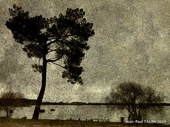 Au bord du lac (JEAN PAUL TALIMI) Tags: biscarrosse jeanpaultalimi talimi texture aquitaine arbre landes lac nature lignes lumieres plage
