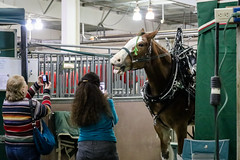 Big Thunder Draft Horse Show (The Ranch Events Complex) Tags: budweiser budweisereventscenter bigthunder drafthorse drafthorseshow horse horses clydesdale larimercounty loveland lovelandco larimer lc colorado