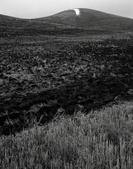 Field in Winter, Eastern Washington (austin granger) Tags: field winter washington palouse fallow crop farm farmer season soil disked film largeformat chamonix correspondence