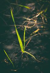 15.02.19 (Kirby_Wilson) Tags: winner grass spring nature fresh freshgrass