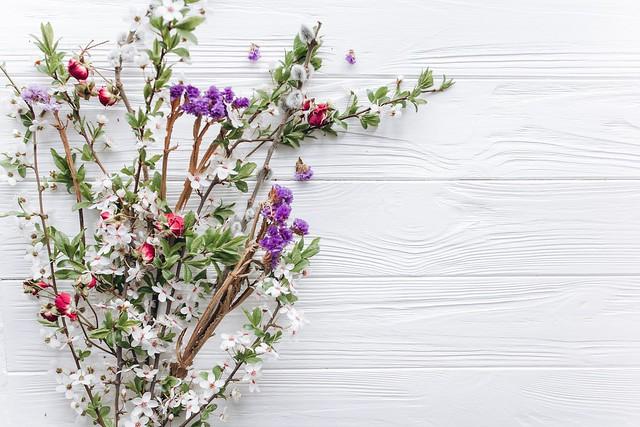 Обои цветы, ветки, природа, фон, весна, цветение картинки на рабочий стол, раздел цветы - скачать