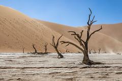 _RJS4652 (rjsnyc2) Tags: 2019 africa d850 desert dunes landscape namibia nikon outdoors photography remoteyear richardsilver richardsilverphoto safari sand sanddune travel travelphotographer animal camping nature tent trees wildlife