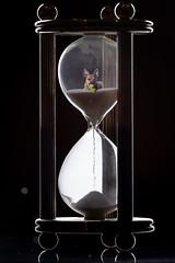 (07/52) Glass Study (Zach & Artsy) Tags: 52weeksfordogs artsy pugratterrier