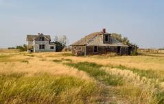 The New House or the Old? (TigerPal) Tags: saskatchewan sask prairie plains backroads explorer abandoned forgotten corinne dustyroad gravelroad farm farmhouse rural ruin ruraldecay