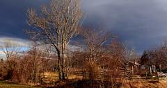Stary ogród. (andrzejskałuba) Tags: polska poland pieszyce dolny śląsk silesia europe widok view sky niebo chmury clouds drzewa trees blue niebieski ogród garden krzewy shrub trawa grees green zieleń natura worldtrekker winter zima fence shed outdoors 1000v40f 1500v60f