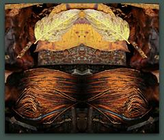Copper Elements (Doris Burfind) Tags: portdover shipyard rust decay metal copper mirror autumn symmetry