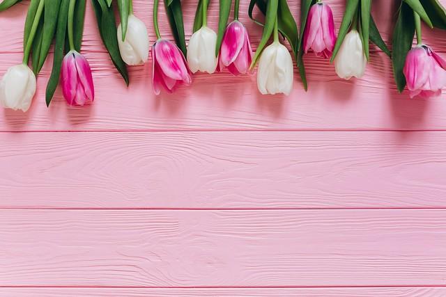 Обои Цветы, Тюльпаны, Фон, Бутоны картинки на рабочий стол, раздел цветы - скачать