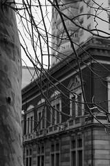 Catania (carmeloserrano#1) Tags: catania città city albero tree bianco nero black white bn bw monocromo monochrome canon eos gimp carmelo serrano carmeloserrano