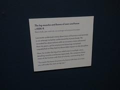 Leonardo da Vinci - A life in drawing - Birmingham Museum & Art Gallery - The leg muscles and bones of man and horse c. 1506-8 (ell brown) Tags: chamberlainsquare birmingham westmidlands england unitedkingdom greatbritain birminghammuseumartgallery bmag museum birminghammuseumandartgallery birminghammuseums birminghamcitycouncil artscouncilengland leonardodavinci leonardodavincialifeindrawing royalcollection printroom sign thelegmusclesandbonesofmanandhorsec15068