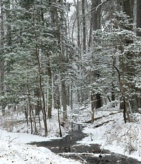 Snowy River (ksharp2) Tags: snow winter trees forest stream cold blizzard white green landscape